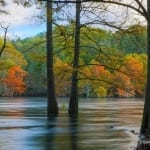 Trees in the River Photo by Randy Sander